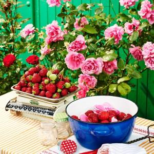 37_Doppelbeere_rose_30789