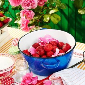 40_Doppelbeere_rose_130796