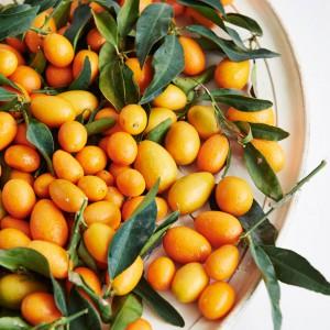 01_Kumquat_frucht_1162