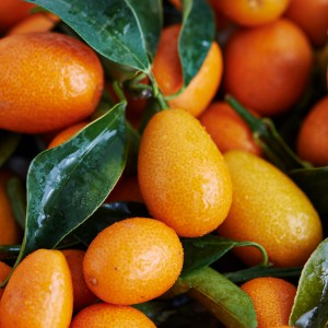 08_Kumquat_frucht_1183