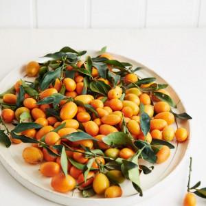 49_Kumquat_frucht_1159