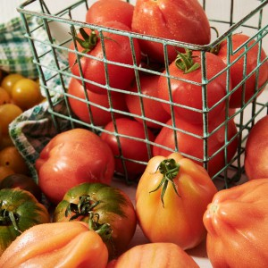 24_Tomate_frucht_2007