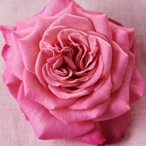14_Valentine_macarons_3444-1