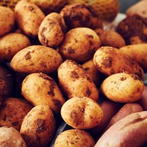 14_Kartoffel_Mood_221071