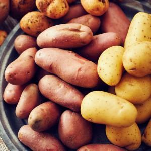 21_Kartoffel_Mood_221073