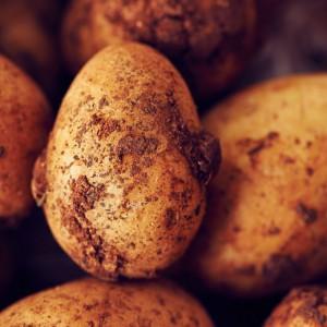 22_Kartoffel_Mood_221077