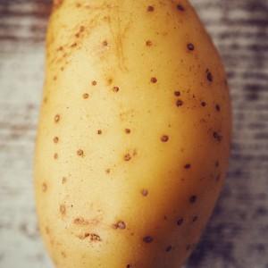 44_Kartoffel_Mood_221079