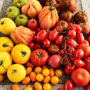 Tomato_Mood_270592