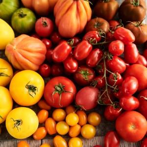 Tomato_Mood_270599
