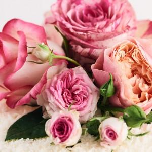 34_Rose_1806_Mood_60925